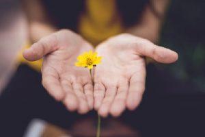 Femal hands holding a flower
